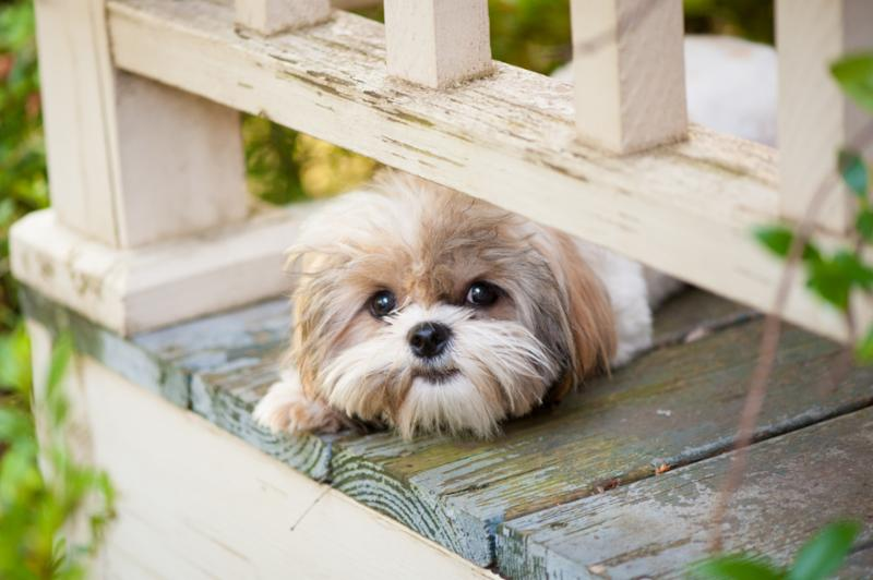 small_dog_on_porch.jpg