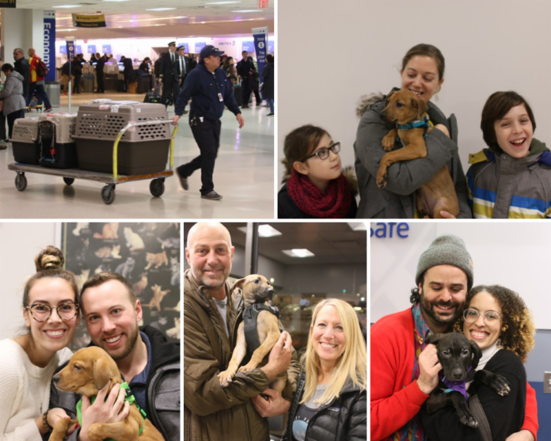 Scenes from Newark Airport: the first satos to arrive in December smile with their new families.