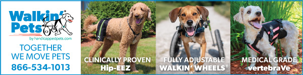 Walkin Pets banner ad