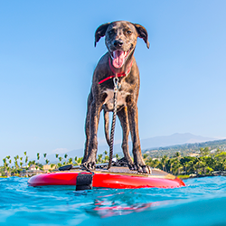 Dog on stand-up paddleboard