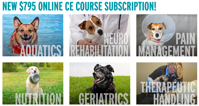Online CE Course Subscription
