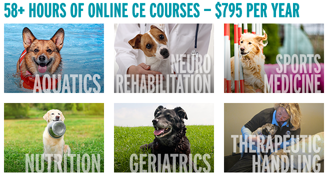 Online CE Course Subscription
