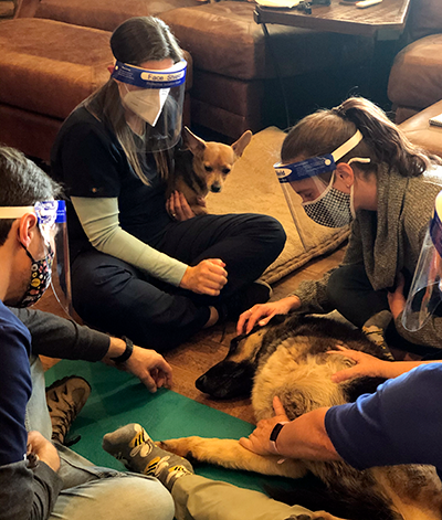 Students in Canine and Feline Medical Acupuncture