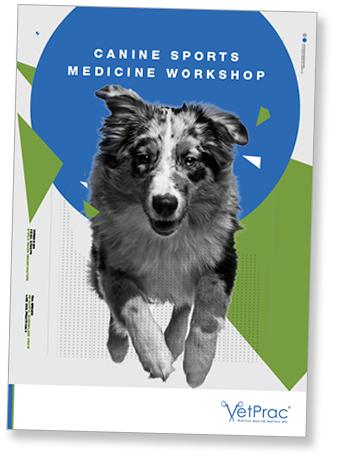Canine Sports Medicine brochure