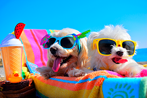 Dogs in sunglasses on the beach