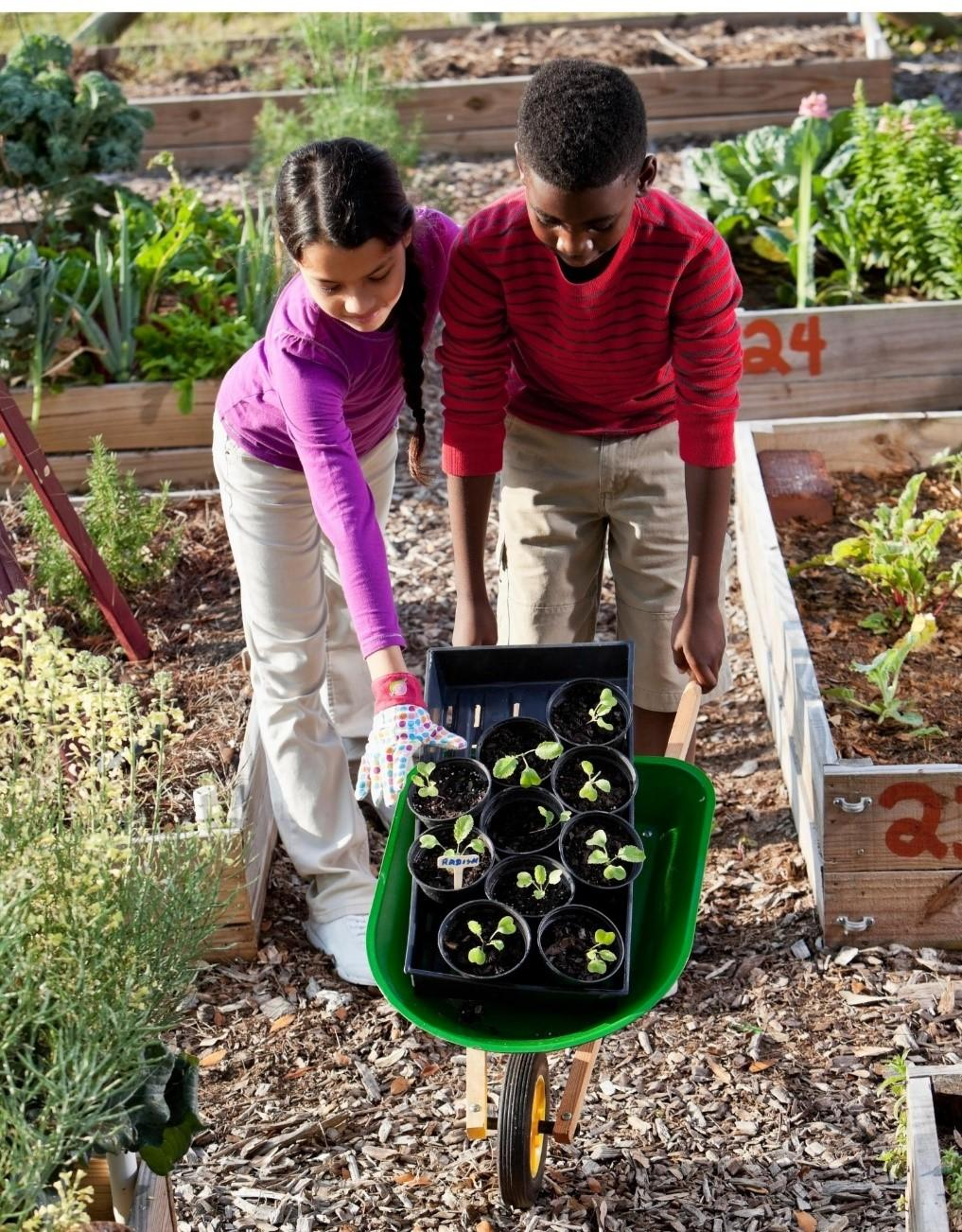 refer-to-the-clemson-extension-seasonal-planting-g.jpeg