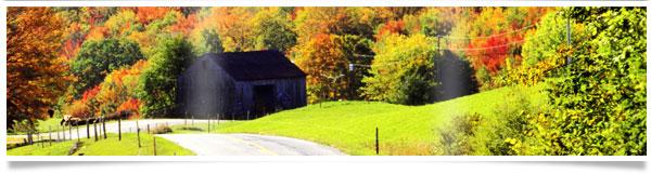 colorful-trees-home-header.jpg