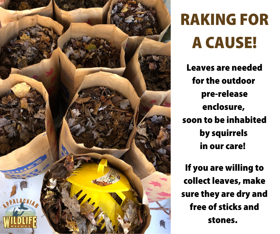 We need leaves - Raking for a cause