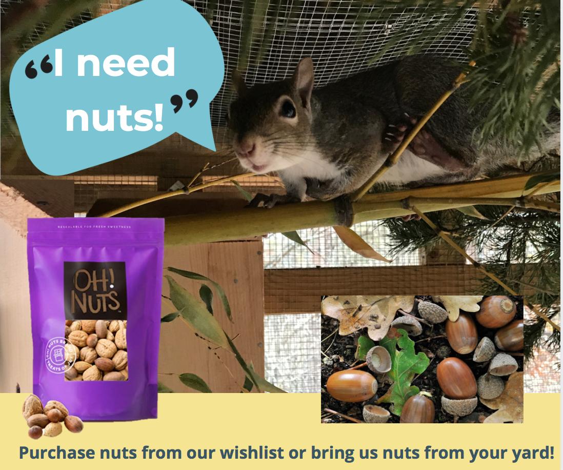 Squirrel saying I need nuts!