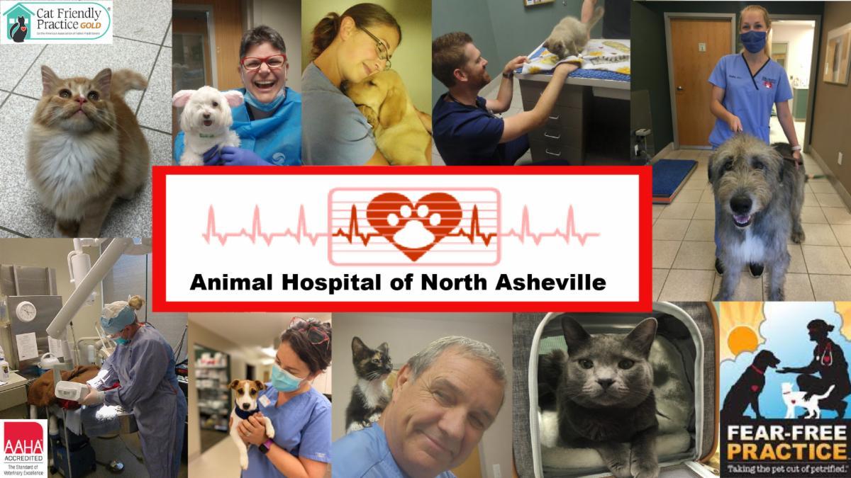 Animal Hospital of North Asheville photo montage