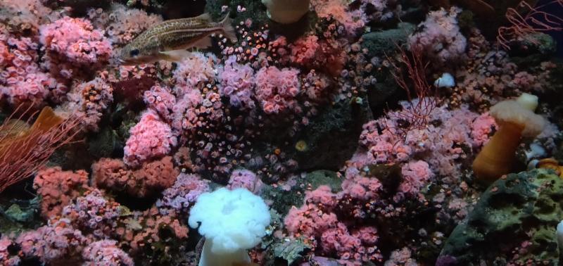 Aquarium with Fish and Anemones