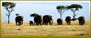 elephant-family-sm.jpg
