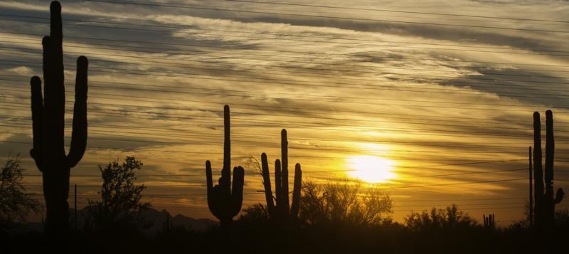 Arizona desert landscape_ Phoenix_Scottsdale area.