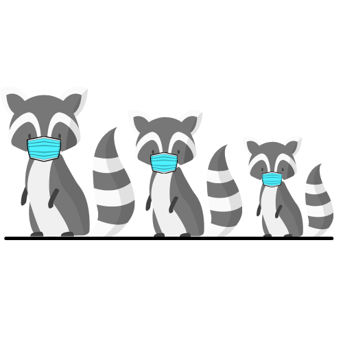 Illustration of three raccoons wearing COVID masks walking in a line