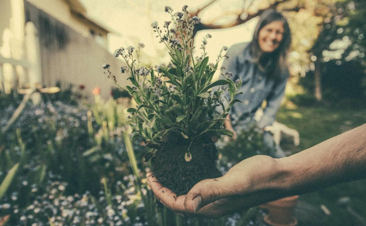 Picture of couple gardening