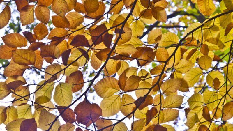Photo of light shining through oak leaves in fall