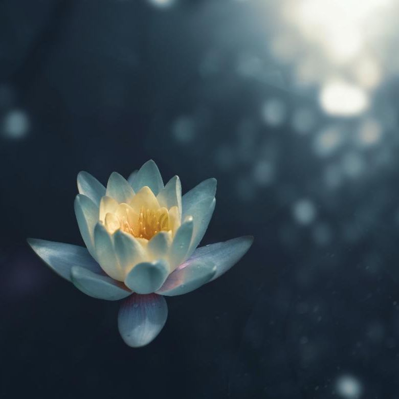 Image of a lotus floating in sunlit water.