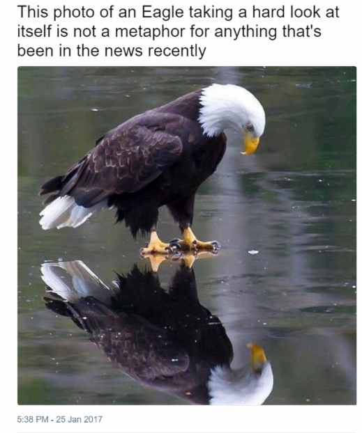 An Eagle Tweet