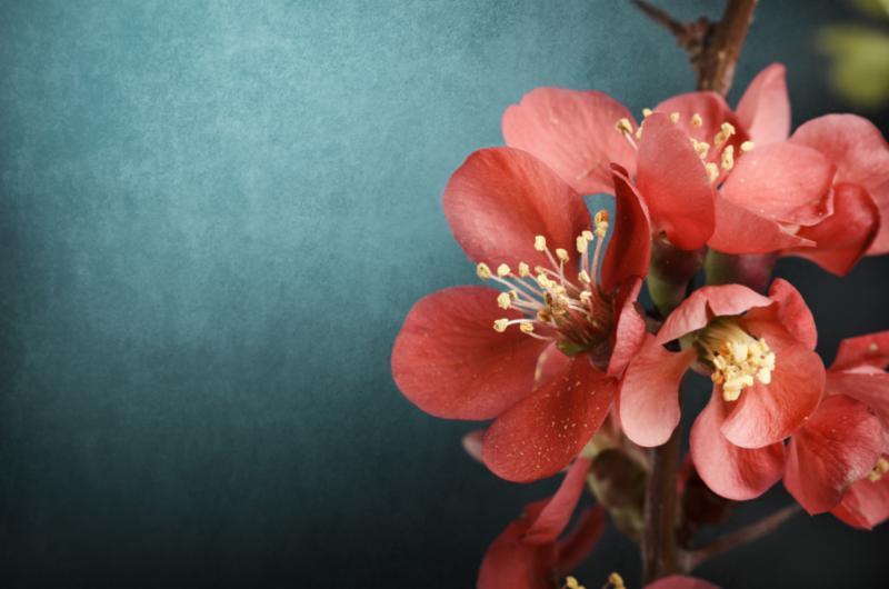 pink_flower.jpg