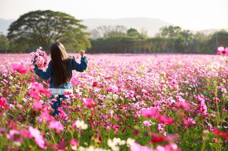 girl_in_flower_field.jpg