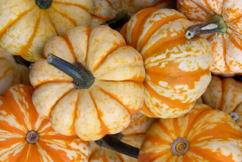 small_pumpkins.jpg