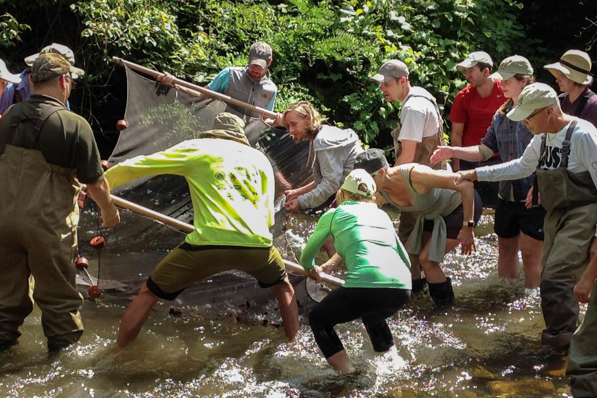 A dozen volunteers work together, calf-deep in a rushing stream to seine aquatic invertebrates with a large net.