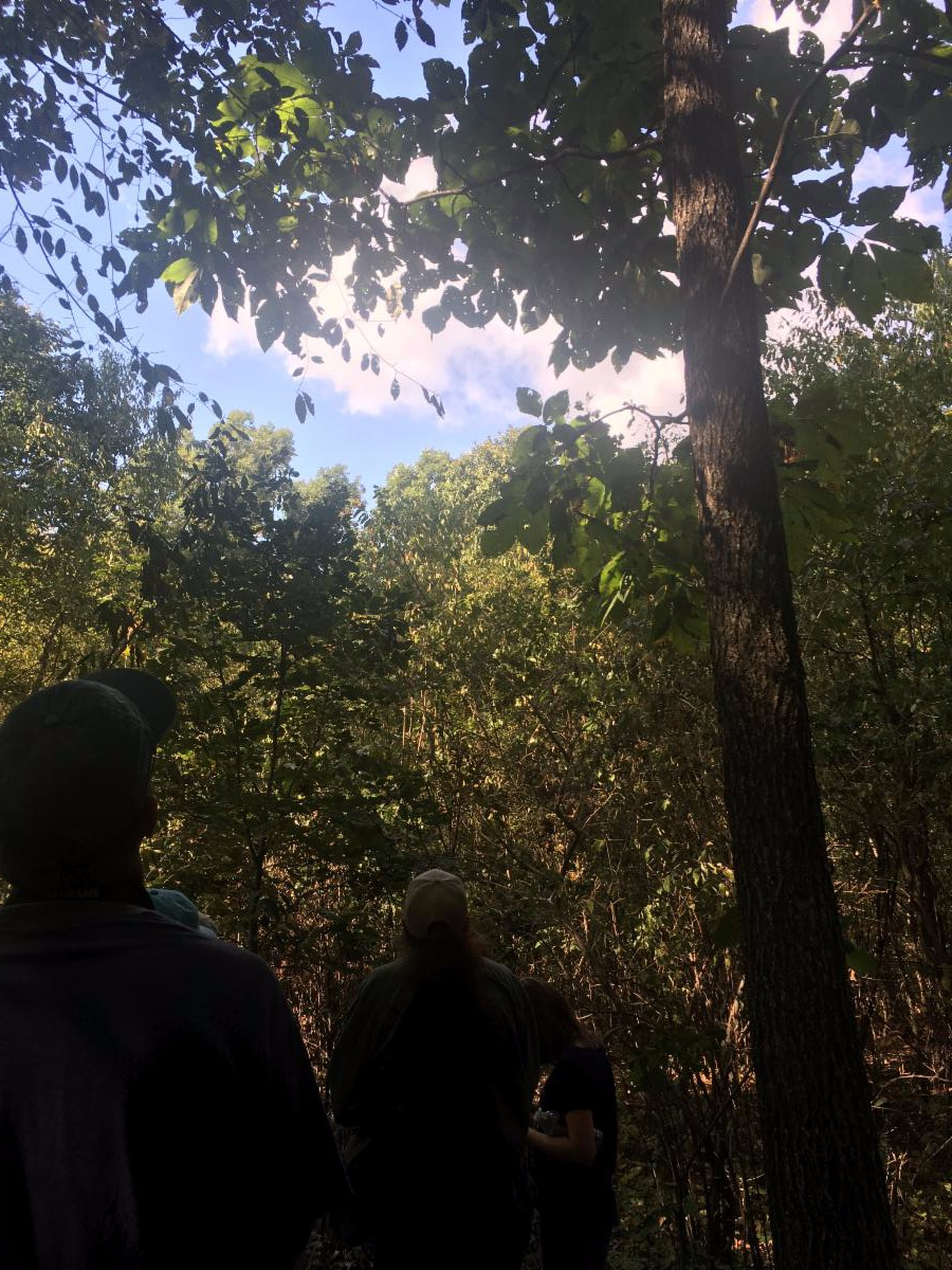 two people peer up at a forest canopy with the sun shining through