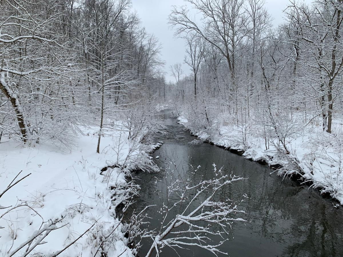 tree-lined creek on a snowy winter's day