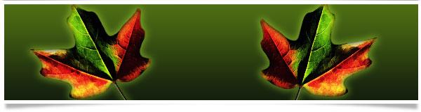 maple-leaves-header.jpg