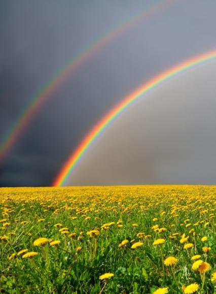 dandelion_field_rainbow.jpg