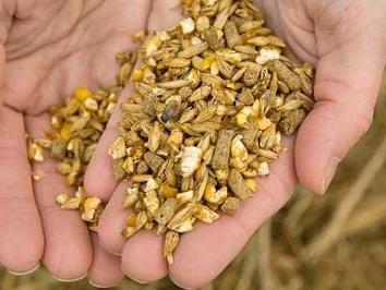 handful of grains
