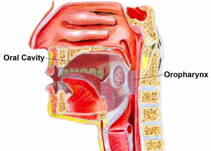 Musc Ent E Update Oral Cavity And Oropharyngeal Cancer A New