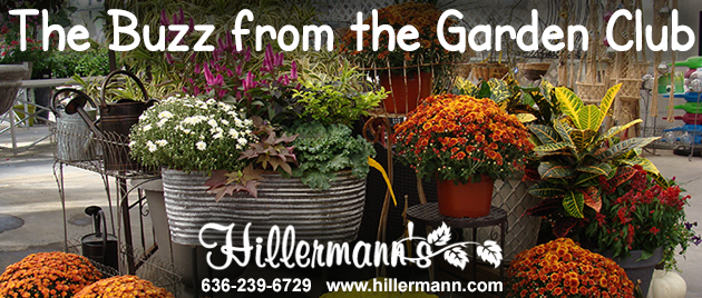 Email heading picture of fall plants - flowers and pumpkins in a pretty display at Hillermann Nursery and Florist with newsletter title and store information