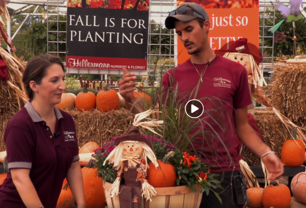 Image for the Fall Container Recipes video by Hillermann Nursery & Florist