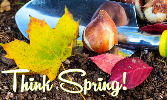 Fall tulip bulb planting picture - Think Spring!