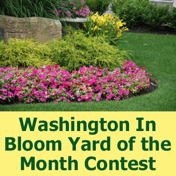 Flower bed picture with text - Washington In Bloom Yard of the Month Contest