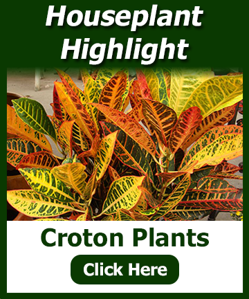 Houseplant Highlight of a croton plant with a picture