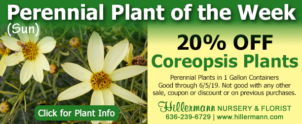 Perennial plant of the week - Coreopsis- click for plant information