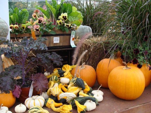 Fall display and items available at Hillermann Nursery and Florist
