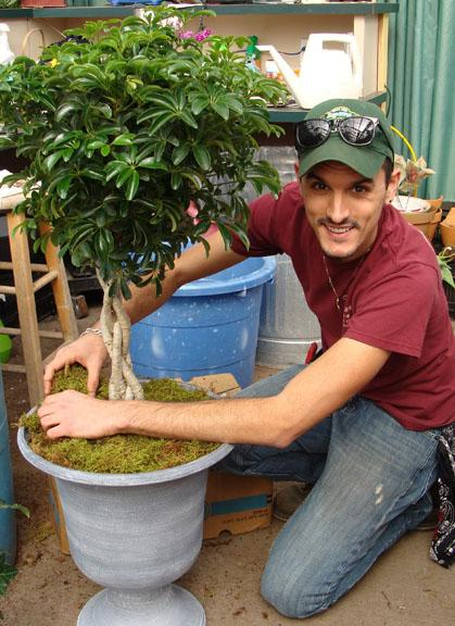Brandon re-potting a ficus tree at Hillermann Nursery and Florist
