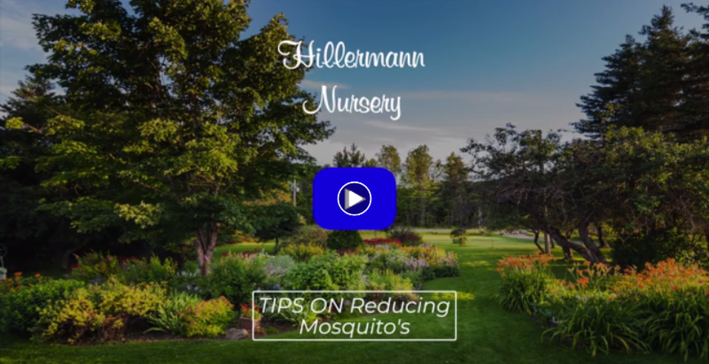 Video image for Tips on Reducing Mosquitoes from Hillermann Nursery & Florist