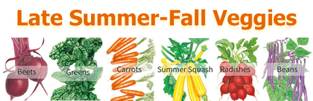 Late Summer-Fall Veggies text with pictures of quick growing vegetables