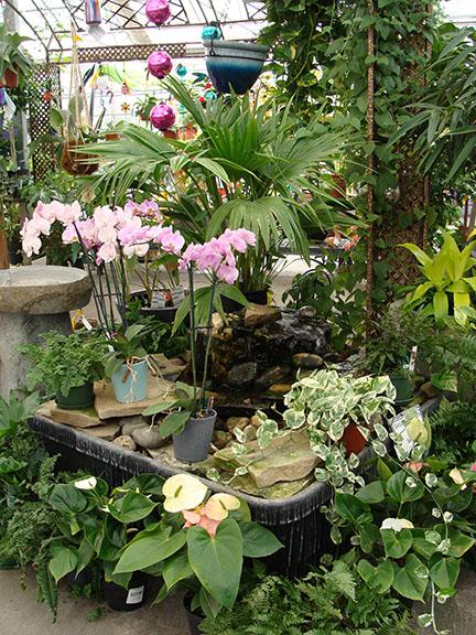 Houseplants and a water feature in a display at Hillermann Nursery and Florist