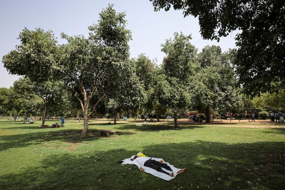 Trees in a park area for Living Near Trees - Not Just Green Space - Improves Wellbeing article from citylab.com