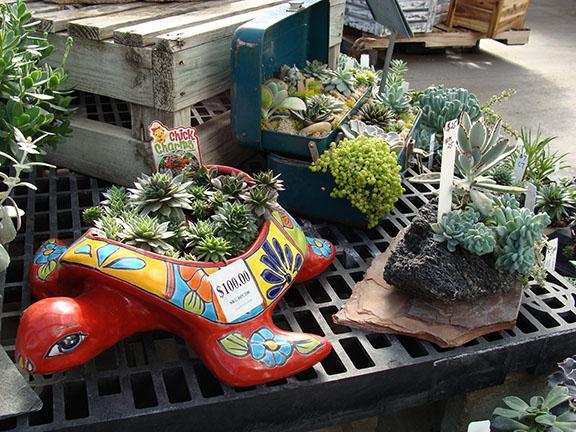 Succulent combo garden planters in the greenhouse at Hillermann Nursery and Florist
