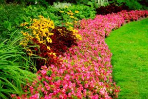 Colorful landscape flower bed
