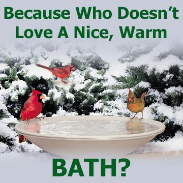 Birds at Heated Birdbath with text - Because Who Doesn't Love A Nice, Warm BATH
