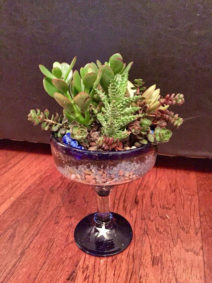 Succulent margarita glass planter