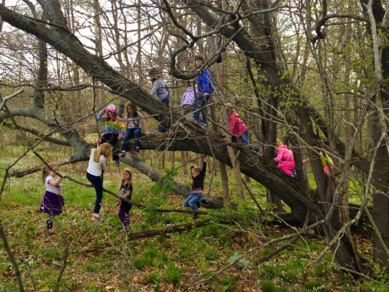 Picture of kids climbing a tree from Rain or Shine Momma