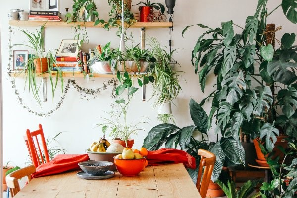 Houseplants near a table and on shelves